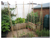 Compact and tidy vegetable garden, with compost bin, water butts, herbs and frame for runner beans.  Kitchen garden design in Bedfordshire.