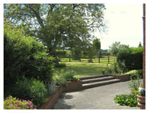 Wide and easy steps lead from the terrace to the walnut tree.  Garden design in Berkhamsted.