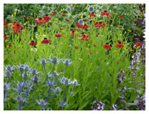 Wildlife friendly planting design, providing seeds for birds to eat in winter, nectar for insects in summer, and a wildlife habitat all year round.