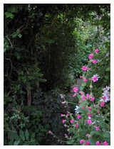 Borders either side of this yorkstone path create a cool, shady area.  The planting includes native species, with a hybrid clematis and campion making a showy display of flowers at the entrance.  Rear garden design Bedfordshire.