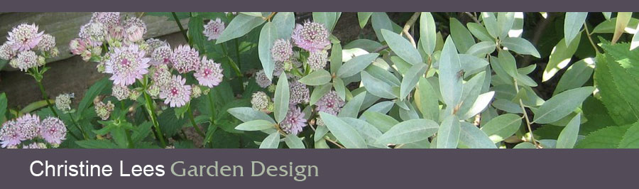 Flowers and foliage in a garden border - silver elaeagnus, which has scented flowers, and pale pink astrantia.